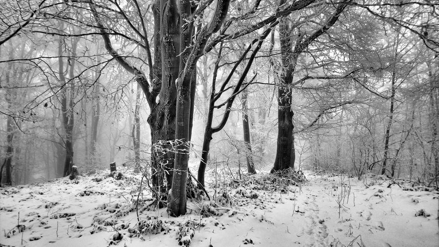 Winter Winter Wintertime Winter Wonderland Winter Trees Winter_collection Winter Magic Winter Beauty  Forest Forest Photography Forestwalk Forest Trees Forest In Winter Winter In Forest Forest Magic Forest Beauty Snow Snow In The Forest Snow Covered Trees Snow Magic Snow Beauty Beautiful Winter Beautiful Forest Beautiful Forest In Winter Nature Day Tree Bare Tree Outdoors No People Nature