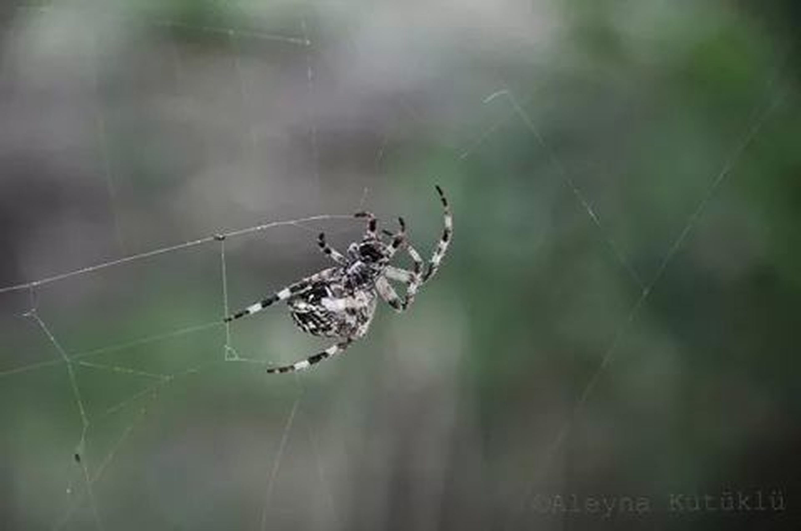 spider web, focus on foreground, animal themes, spider, close-up, animals in the wild, nature, insect, one animal, wildlife, selective focus, day, outdoors, plant, no people, fragility, beauty in nature, tranquility, forest, weather