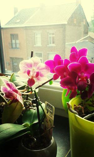 Flowers Eyeem Flowers