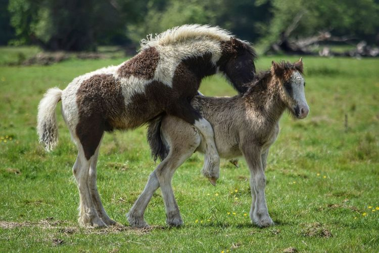 Foals Bonding Togetherness Frolicking Domestic Animals Animal Themes Tree No People Outdoors Grass Playing Horses Pony Livestock Foal In Field Young Animals Rural Scene Animal Wildlife Farm Live For The Story Animals In The Wild Farm Life Equestrian Beauty In Nature New Born