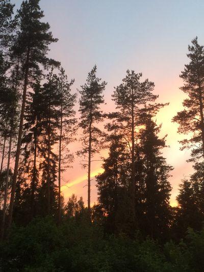 030616 Kirkkonummi, Finland.