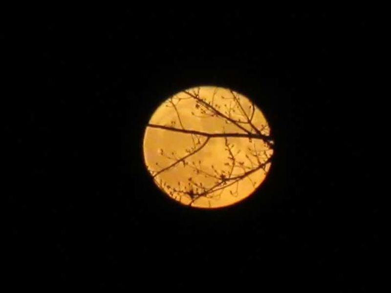 No Filter, No Edit, Just Photography Supermoon2016 Super Moon 14 November Branches In Front Of Moon