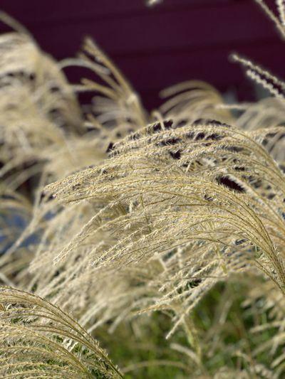 Close-up of dry grass