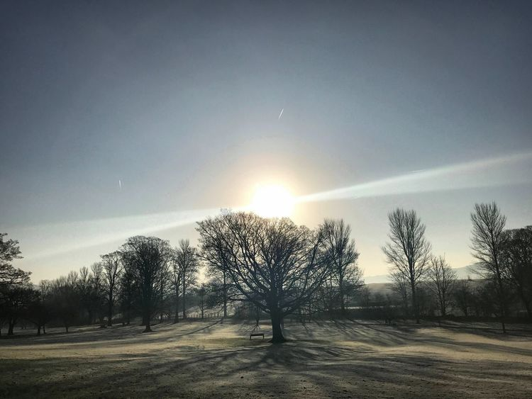 Sunlight Winter Frost Morning Nature_collection Beauty In Nature Outdoors Landscape_Collection Nature Tree Scenics No People EyeEm Best Shots - Nature Landscape Park Beauty In Nature Cold See The World Through My Eyes