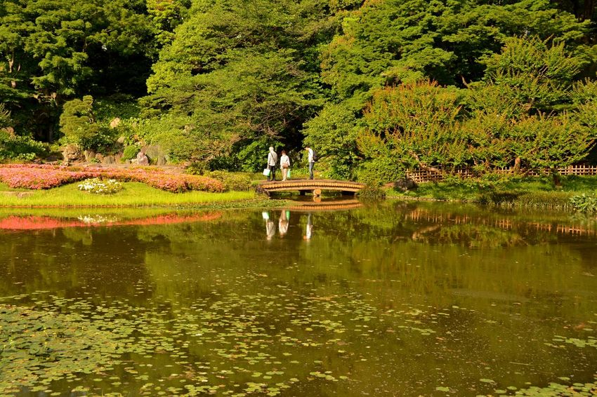 Imperial Palace Garden Imperial Palace Tokyo Day Forest Garden Photography Lake Outdoors Reflection Tree Water Waterfront