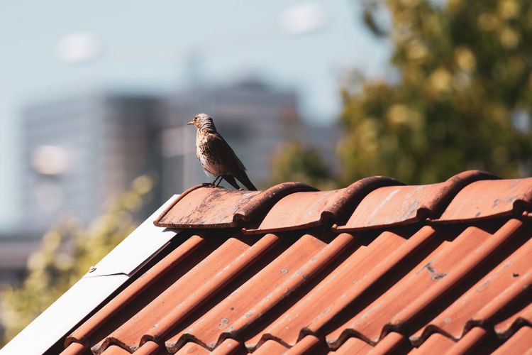 Bird perching on roof of building