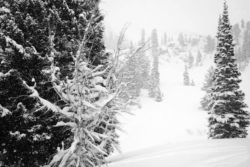 Winterwonderland Bare Tree Black & White Blackandwhite Christmas Cold Temperature Covering Frozen Graphic Group Of Trees Mountains Season  Snow Tree Weather White Christmas Tree Winter