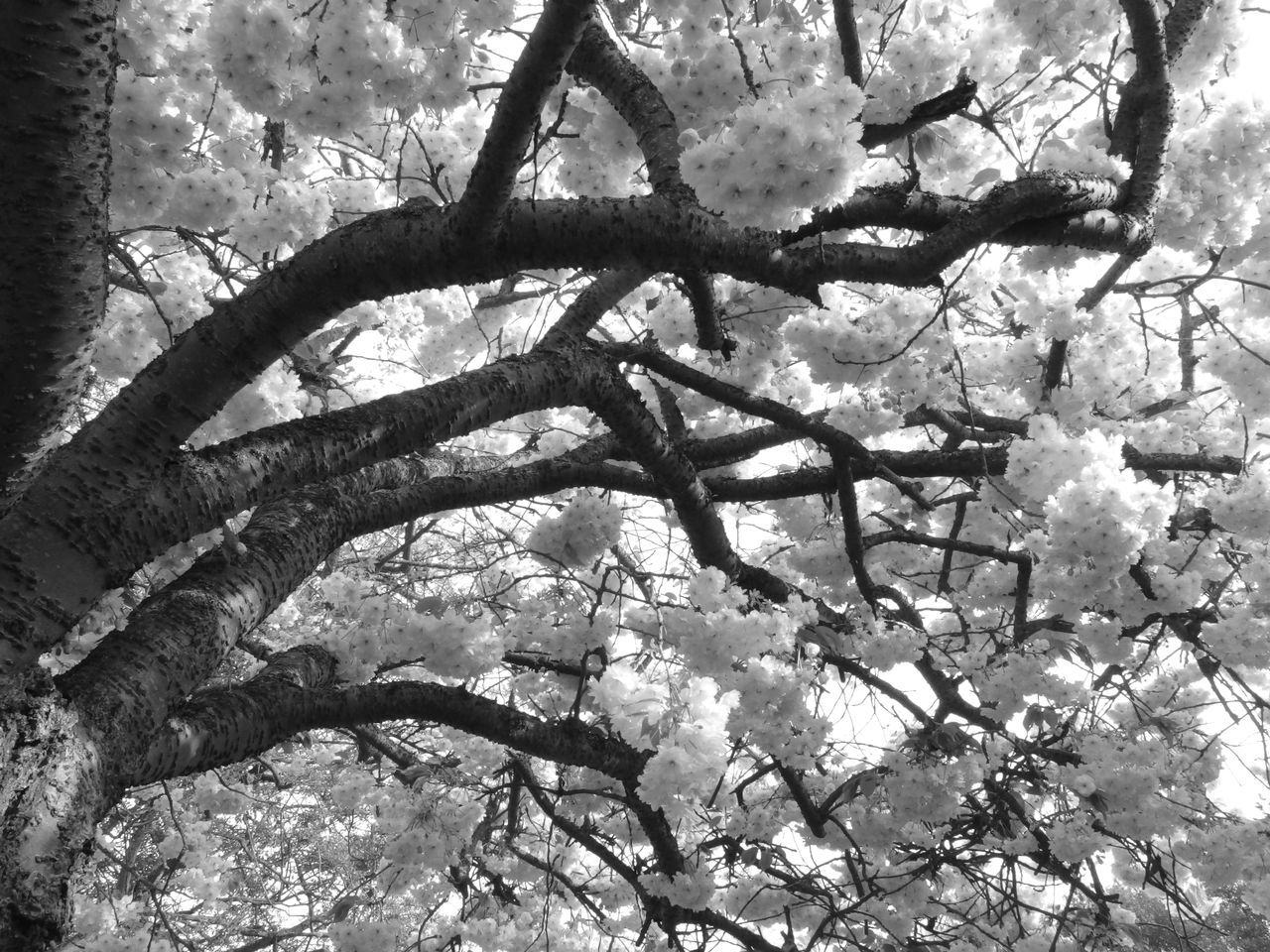tree, branch, growth, nature, low angle view, no people, flower, day, beauty in nature, outdoors, fragility, close-up, freshness, sky
