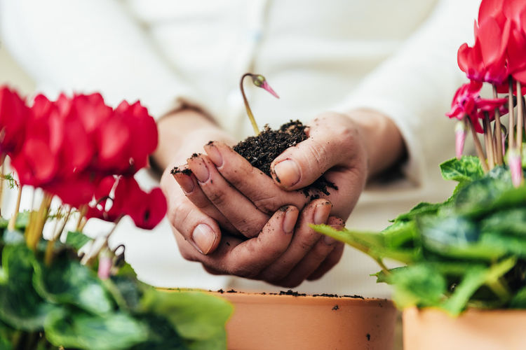 Freshness Human Hand One Person Hand Human Body Part Holding Plant Selective Focus Flower Real People Food Indoors  Healthy Eating Vegetable Food And Drink Leaf Flowering Plant Wellbeing Plant Part Close-up Preparation  Home Interior Copy Space Flowerpot People Young Adult Lifestyle Seeds Bio Eco Earth