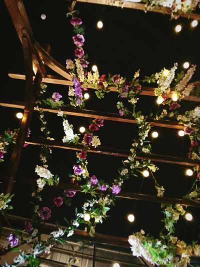 Low angle view of flowering plants hanging from ceiling