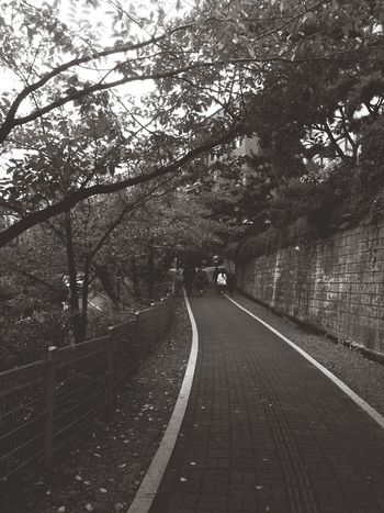 One Day One Photo Autumn the way to univ.