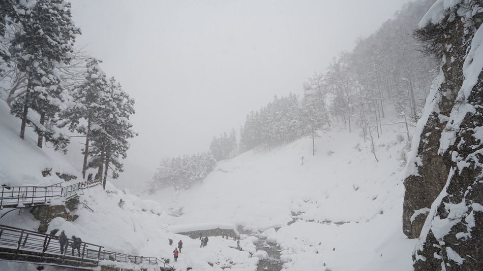 snow storm at Snow monkey park Beauty In Nature Cold Temperature Day Extreme Weather Fog Forest Jigokudani-Snow-Monkey-Park Mountain Nature No People Outdoors Scenics Shigakogen  Sky Snow Snow Monkeys Snow Storm Snowing Tranquil Scene Tranquility Travel Destinations Travelers Tree Weather Winter