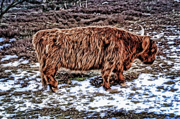 Free nature animals Nature Animals Eye4photography  HDR HDR Collection EyeEm Nature Lover Photography Walking Around Winter Check This Out