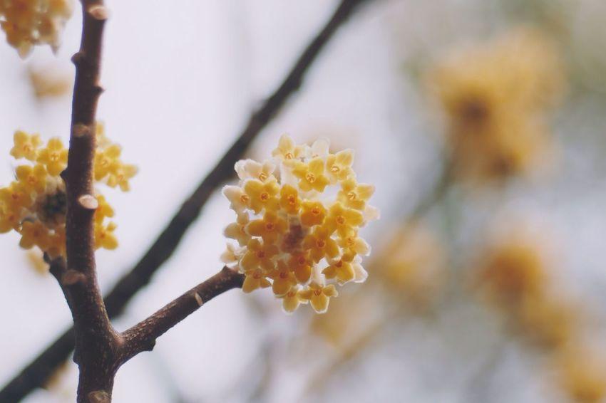 Flower Spring Flowers Flowers
