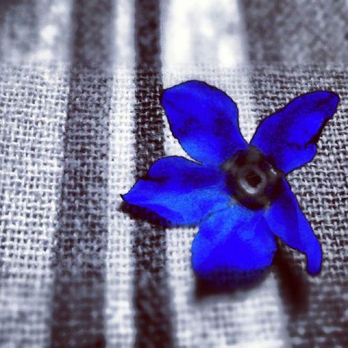 Blue. Colors Blue Flower Picoftheday photooftheday igersItalia igersAbruzzo jj instamood spring zoom+