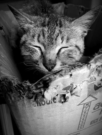 Animal photography, cat in the box Peaking Out Cute Blackandwhite EyeEm Selects EyeEmNewHere Close-up Domestic Cat Cat Whisker Kitten Pets At Home Feline