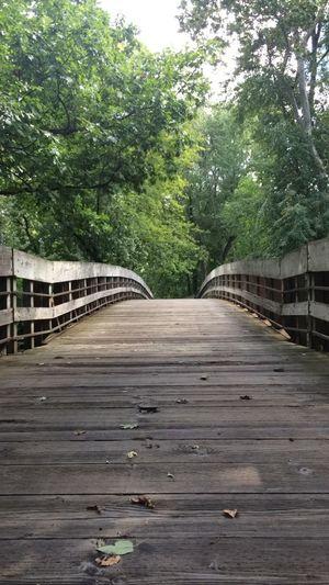 Bridge Day Footbridge Nature No People Outdoors Railing Summer Tree Trees