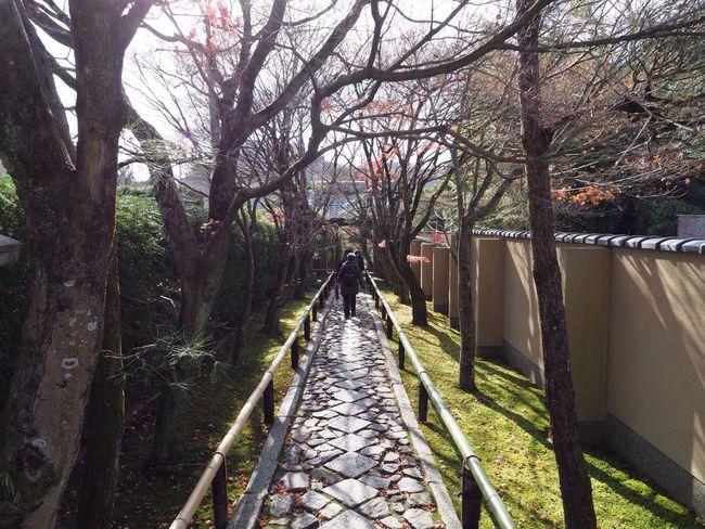 Kyoto Japan Kouetsuji Temple Autumn Olympus PEN-F 京都 日本 光悦寺 寺 秋