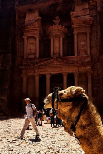 Dedicated to the camels.... For thousands of years you never stopped of helping humanity and bringing happiness to us... Thanks Camels we love you. Ancient Camel History History Architecture History Through The Lens  Jordan Khaznadar Love One Animal Petra