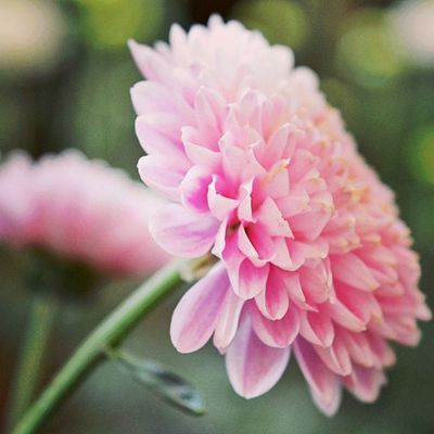 Good morning for new beginning Flower Nikon Dailydose Happy good morning