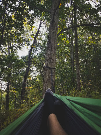 Low Section Of Person In Hammock Against Trees In Forest