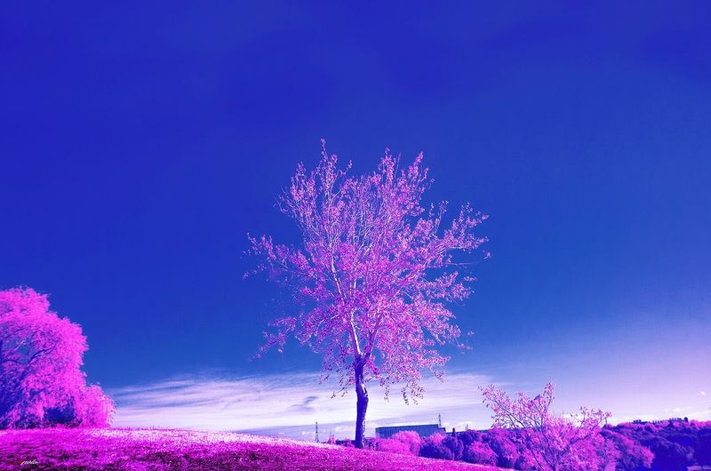 Purple Pink Color Infraredphotography Infrared Filter Madrid,spain