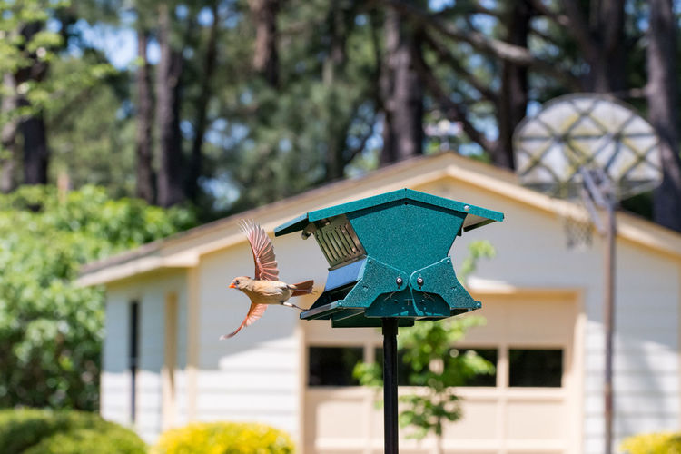 Bird flying out of a bird feeder