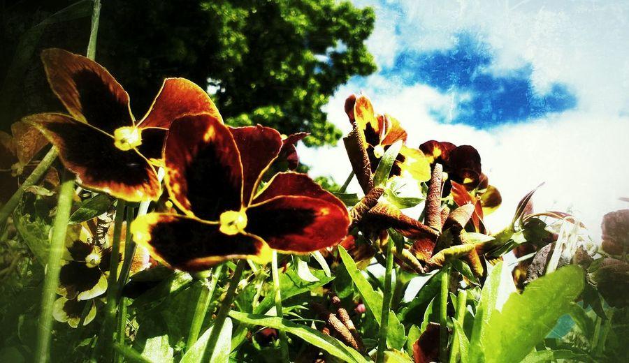 Summer 25 Days Of Summer Sunnydelight EyeEm Best Shots