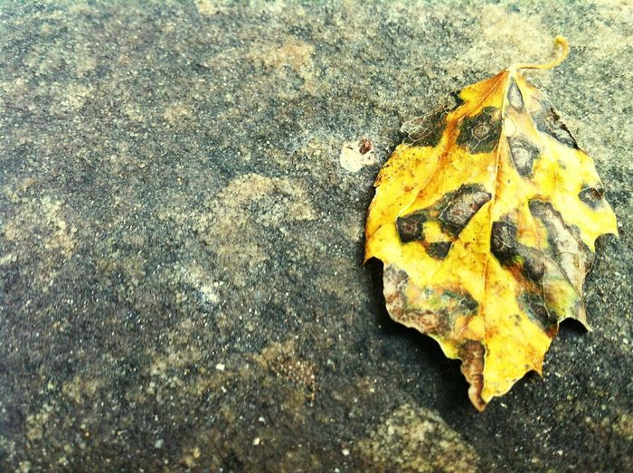 Fall Fall Beauty Fall Leaves Autumn Leaves Leopard Leaf Textures And Surfaces Nature Patterns Dry Leaf