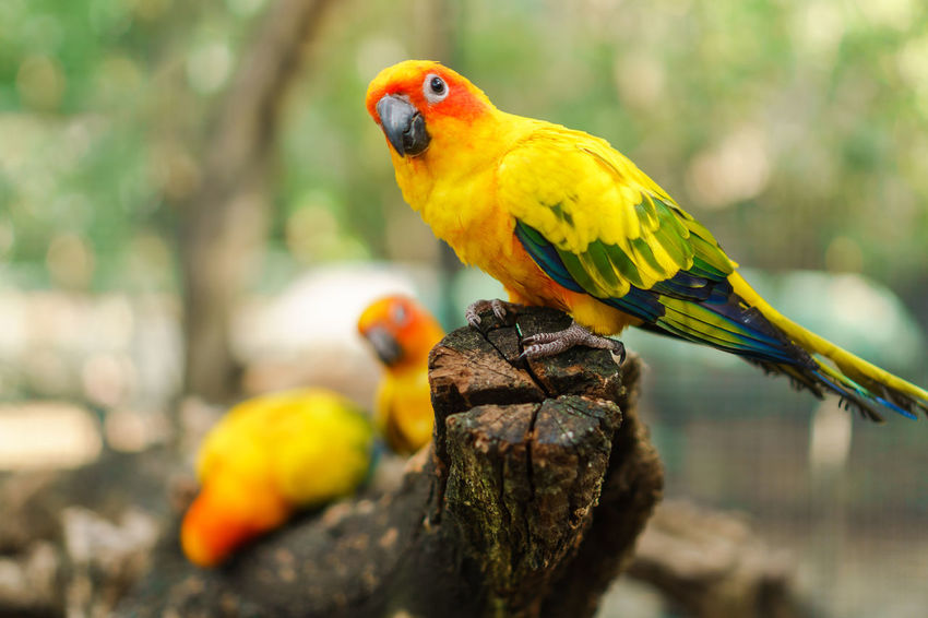 Animal Themes Animal Wildlife Animals In The Wild Beauty In Nature Bird Branch Close-up Day Focus On Foreground Gold And Blue Macaw Macaw Nature No People One Animal Outdoors Parrot Perching Tree Yellow