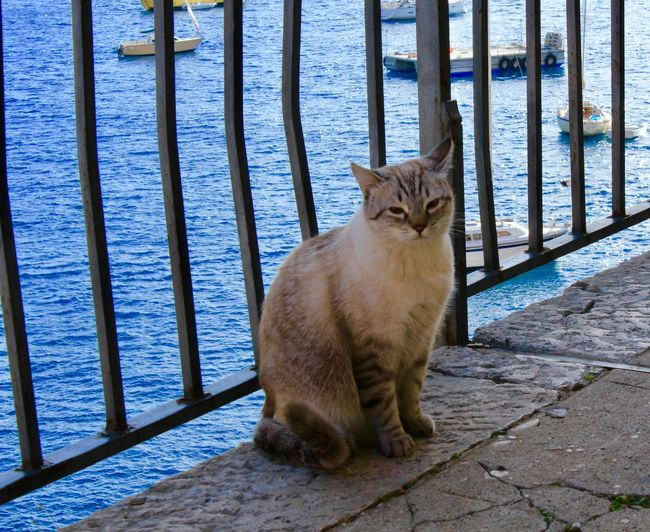 Animal Themes Cat Lovers Cat Photography Day Domestic Animals Domestic Cat Feline Full Length Mammal Nature No People One Animal Outdoors Pets Sea Water