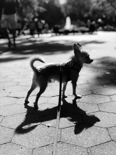 Patience Animal Animal Themes One Animal Canine Dog Mammal Domestic Animals