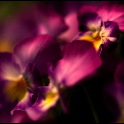 gänseblümchen Flower Lobostudio Lobo_flowers
