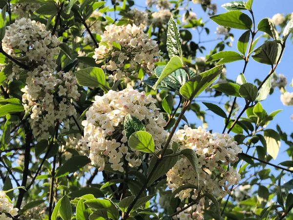 Growth Freshness Flower Beauty In Nature Fragility Nature Close-up Sunlight Outdoors Leaf No People Tree Day Branch Plant Green Color Spring Sunlight Plum Blossom Tree Green Color Freshness Beauty In Nature Healthy Eating Lilac