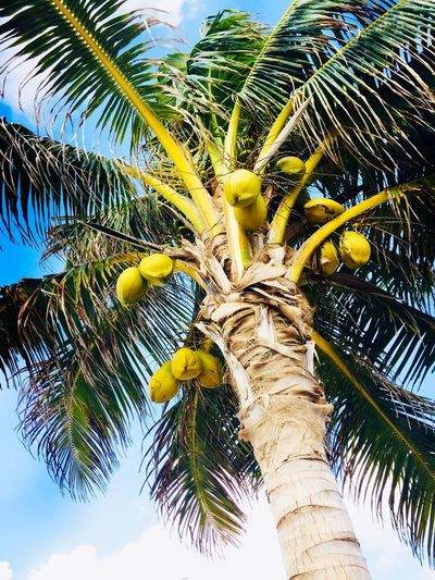 пальма Palmera Palmeras Palme Vacation Vacations Mexico Akumal Plant Tree Growth Tropical Climate Palm Tree Low Angle View Nature Coconut Palm Tree Sky Day Green Color No People Beauty In Nature