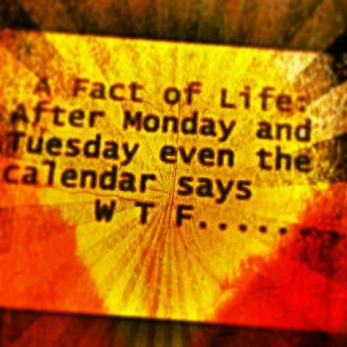 TrueFact Weeksesh Wedthursfridayclub WTF