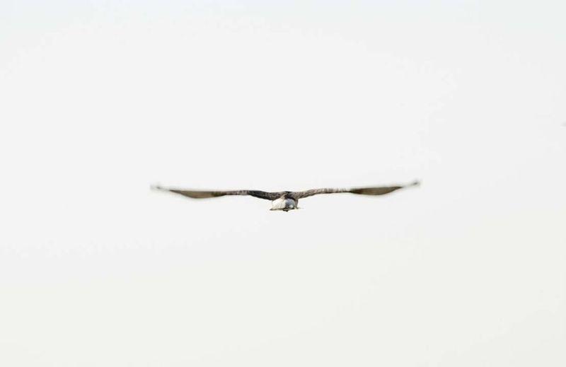 43 Golden Moments Cordobaargentina Argentina Birds Freedom Flyingbird Peace Peacebird Córdoba Animals City Life