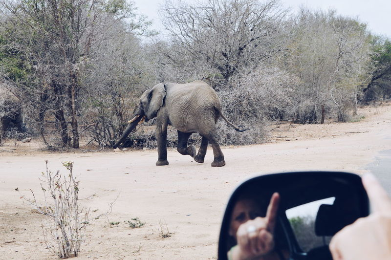 The Drive South Africa Animal Themes Elephant Nature Outdoors Kruger Park On The Road Mirror The Great Outdoors - 2017 EyeEm Awards Live For The Story An Eye For Travel
