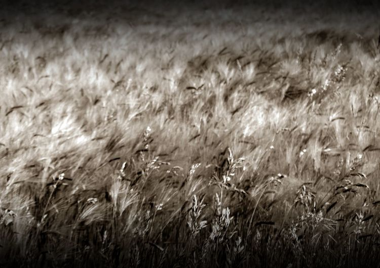 a field in german #The Week On EyeEm #Wallpaper Backgrounds Beauty In Nature Field Focus On Foreground Grass Landscape Nature
