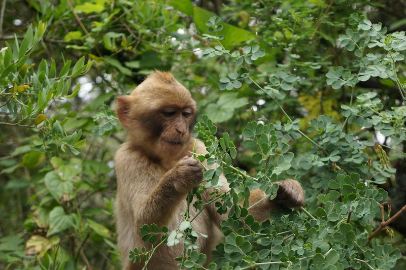 One Animal Animal Wildlife Mammal Nature Animals In The Wild Outdoors No People Tree Monkey Day Close-up Leaf EyeEm Nature Lover Eating Green Color Macaque Young Bush Shrub