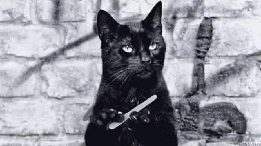 Cats Purrfect Catlovers BLackCat Blackcatlove Cat Nails Beauty Black&white