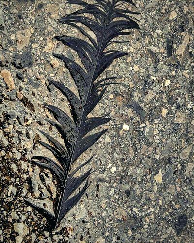 Wet Feder Asphalt Background Streetart Straßenleben Federn Lassen Oldshot Feather  Golden Shimmer