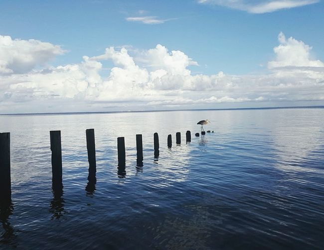 Grey heron perching on wooden post in mobile bay against sky