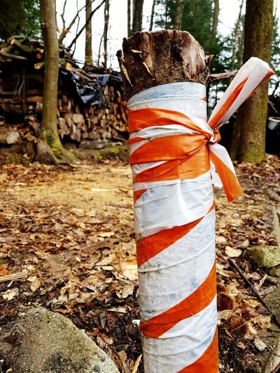 Wood log with plastic warning foil Red White Plastic Foil  Wood Log Sign Warning Tree Working Tree Trunk