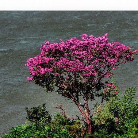 Naturelovers Nature_seekers Nature Nature_perfection Natureza Naturaleza River Flowers Flower Great_captures_paraguay FozDoIguaçu Fozeassim Paraguay_brasil Rioparana Pic Picoftheday Perfection