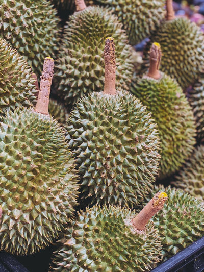 Durian, king of fruit the signature in thailand