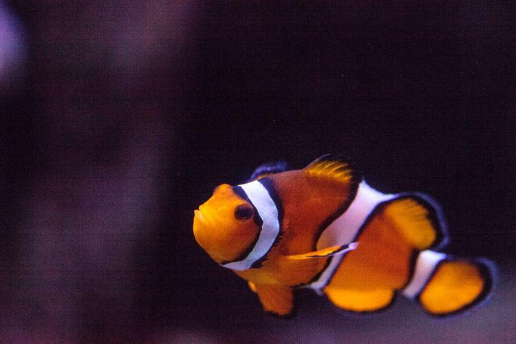 Close-up of fish swimming in aquarium