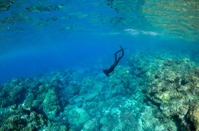 Adult Animal Themes Animals In The Wild Day Exploration Freediving Full Length Greenisland Nature One Animal One Person Outdoors People Scuba Diving Sea Sea Life Swimming UnderSea Underwater Water