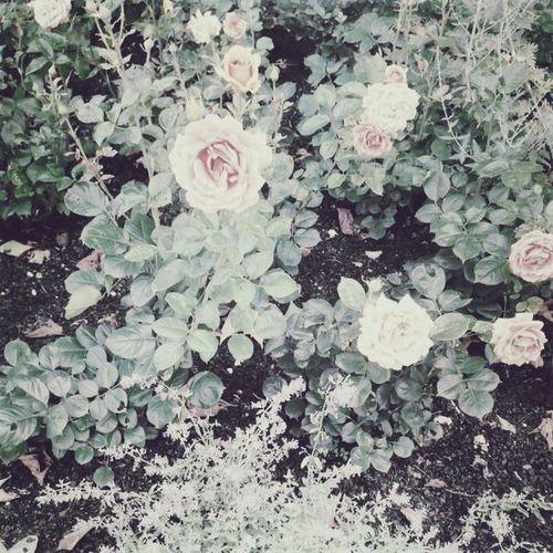 Flower of love. FlowerofLove Pink Photography Love