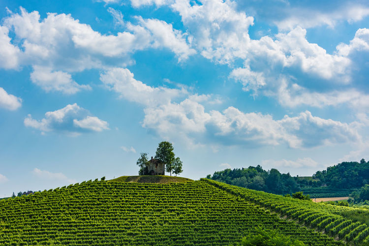 Nikon D7200 - Nikkor 18-105 mm Agriculture Beauty In Nature Blue Cloud Cloud - Sky Cultivated Land Eye4photography  EyeEm Best Shots Farm Green Green Color Hanging Out Hills Italy Landscape Nature Outdoors Panorama Panoramic Rural Scene Scenics Sky Taking Photos Tranquil Scene Tranquility